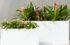 Kurzanleitung für die Auswahl Ihrer Pflanzgefäße